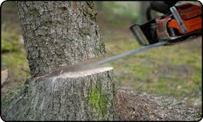 tree-cutting-services
