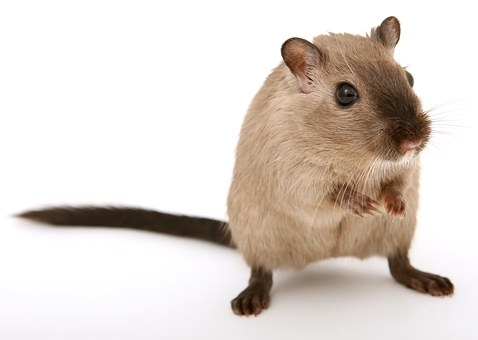 4 Reasons Why Your Restaurant/café Needs A Timely Pest Inspections